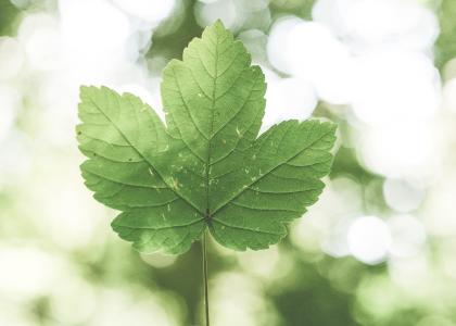Le Groupe LML | Feuille verte dans la nature